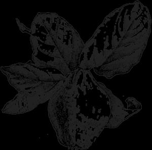 Logo BnB Cydonia